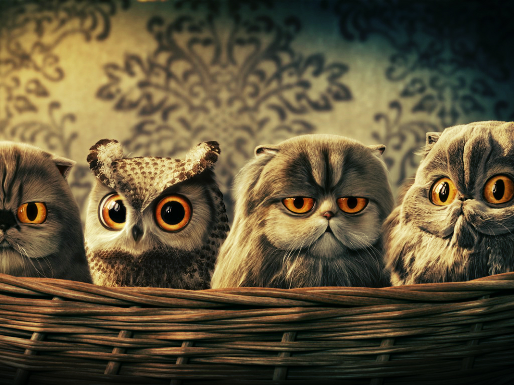 The owls [INCI'S] by SottoPK