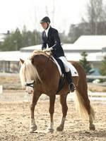 Dressage, stallion by wakedeadman