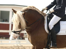 Dressage, stallion 2 by wakedeadman
