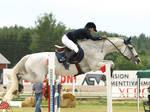 Swedish warmblood mare