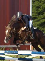 Welsh cob stallion by wakedeadman