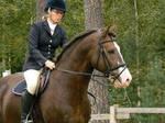 Stallion 13