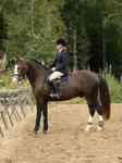 Stallion 16