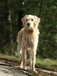 Mixed-breed dog 4