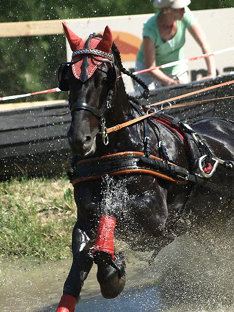 Arabo-friesian sporthorse 2 by wakedeadman