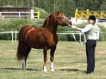 WC-stallion, larger version