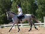 Irish sport horse 2