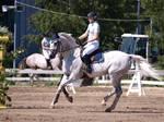 Gallop 2