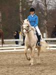 Newforest pony