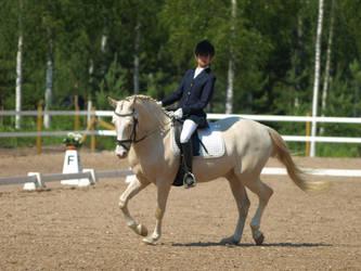 cremello pony dressage by wakedeadman