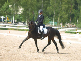 pony mare dressage by wakedeadman