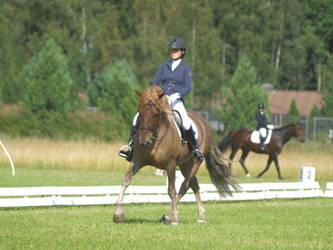 finnhorse, dressage august2 by wakedeadman