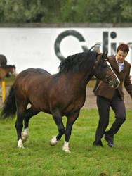 welsh c stallion by wakedeadman