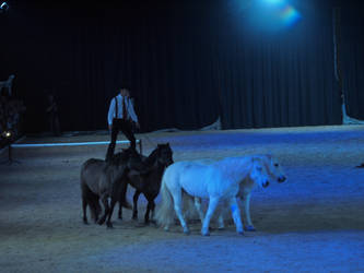 Horses by wakedeadman