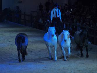 horses4 by wakedeadman