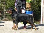 Rottweiler 5 by wakedeadman