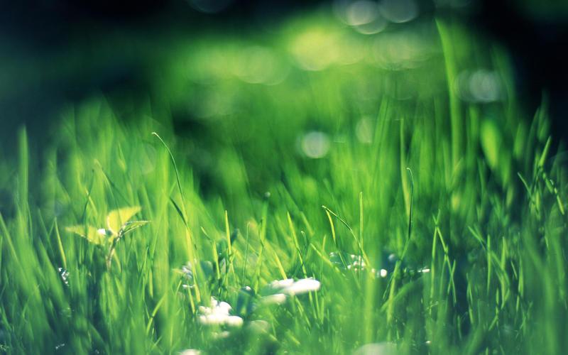 Grass 1920x1200 by NOCTmind