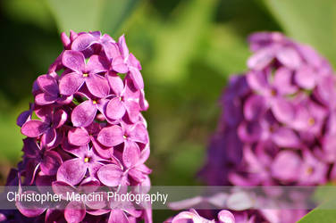 Pillars of Purple by DJBIG