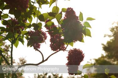 Bloom in Sun by DJBIG