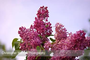 Morning Bloom by DJBIG