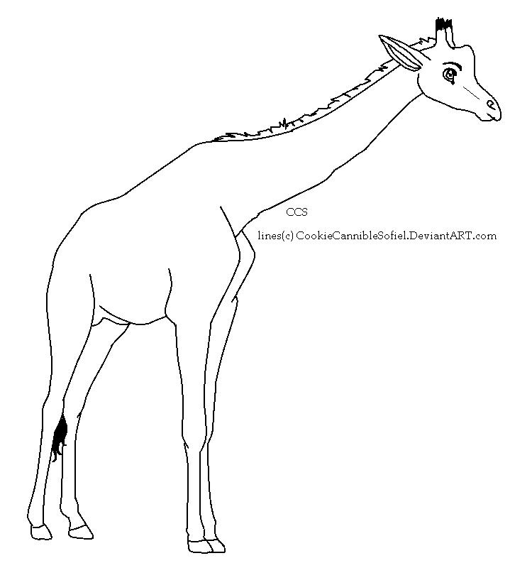Line Drawing Giraffe : Giraffe lineart by cookiecanniblesofiel on deviantart
