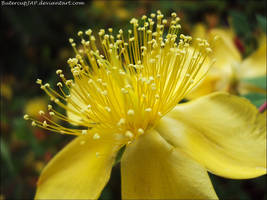 Yellow Hit by ButtercupJAP