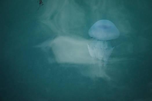 The Jellyfish: Underwater