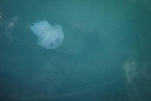 The Jellyfish: Underwater II