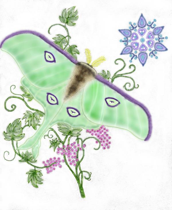 Colored_Luna_Moth