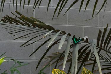 Jade Butterfly by Nailkita