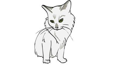 Cat - Angel, White Longhair Bobtail