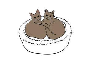 Kittens -Lucien and Sage ginger long/short hairs by Nailkita