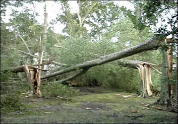 Tree Damage by Horsesnhurricanes