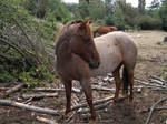 Red Roan Stock 2