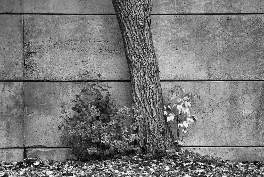 Arbor Study 1 by BenoitAubry