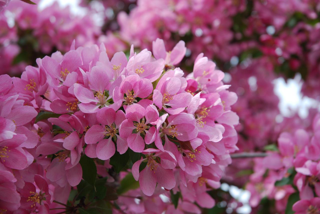 Le printemps by benoitaubry on deviantart for Semer le gazon au printemps