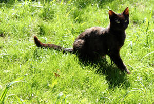 More summer cats