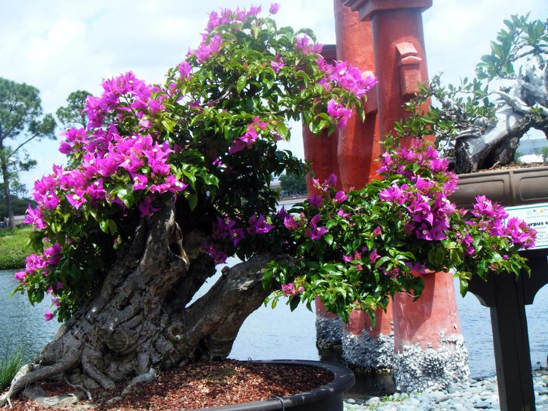 """Japon Ağacı """"Bonzai"""".. (Siteye Gönderiyorum)"""