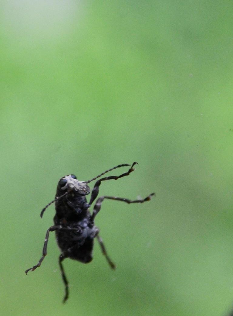 Rainy Day Bug by wondrousbutstrange