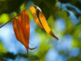 Autumn leaves by JoeGP