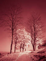 Autumn Infrared by JoeGP