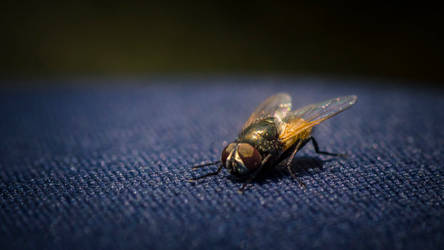 Fly on my pants