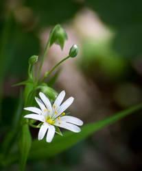 2x5 White flower by JoeGP