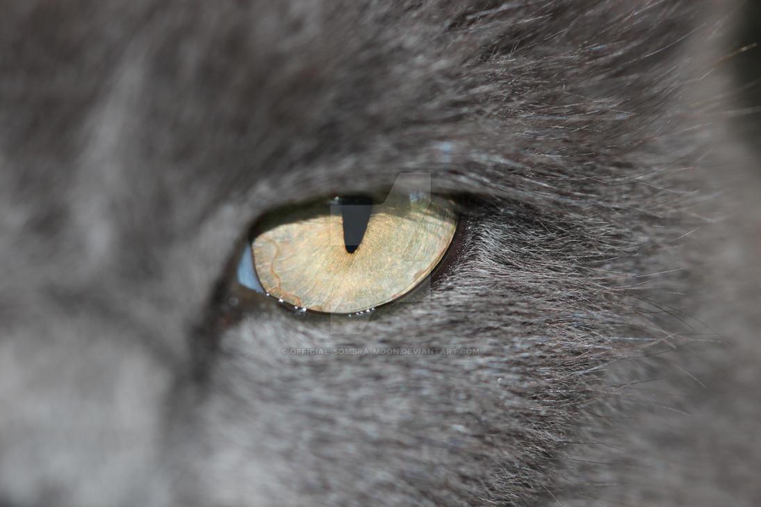 My Cat's eye by Wandering-Chaos