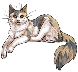 Maine Coon auto - old