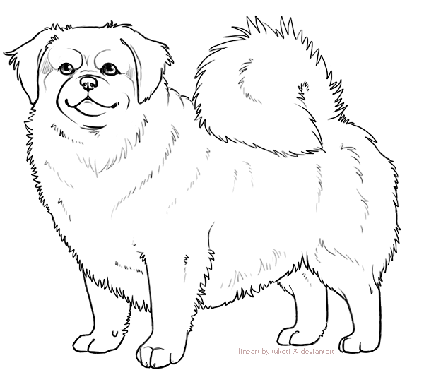 Free Lines - Tibetan Spaniel by tuketi