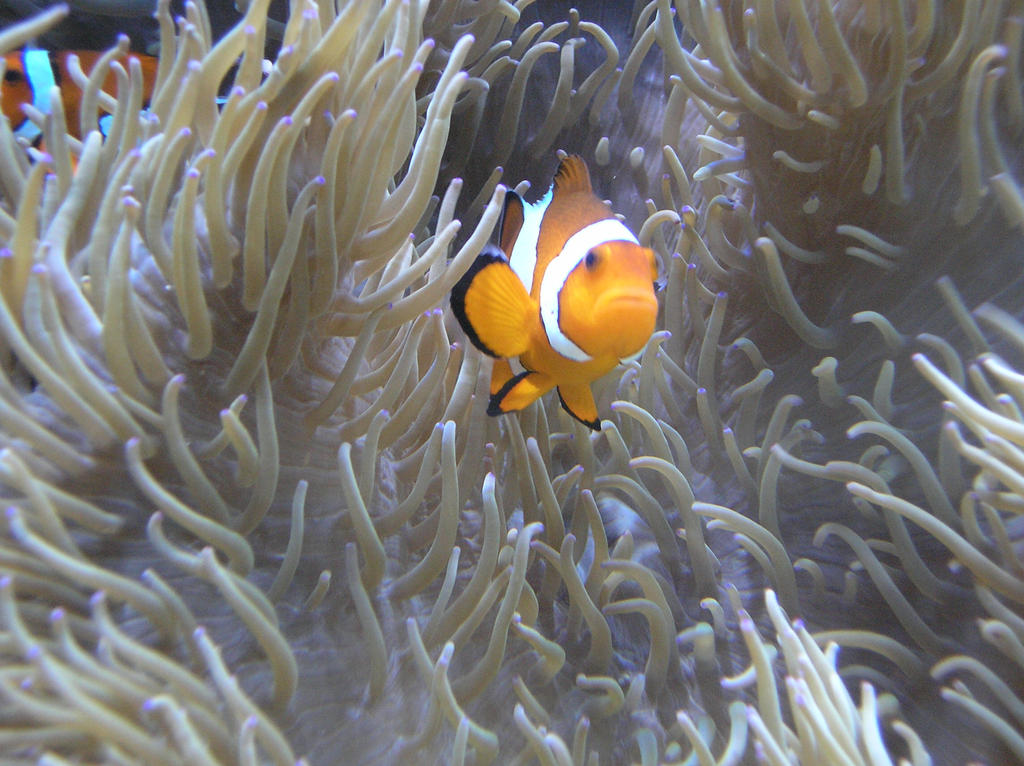 nemo? by thomas4863