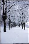 Winter Wonderland by littlemewhatever