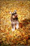 Autumn Leaves ll