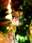 Bee A Flower by noyasaraf